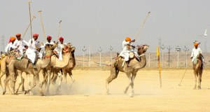 Camel Polo in action
