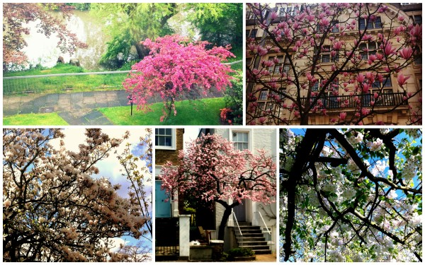 'tis the Season of Blossom!